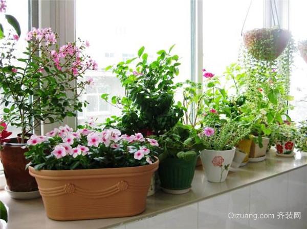 绿植植物租摆图片