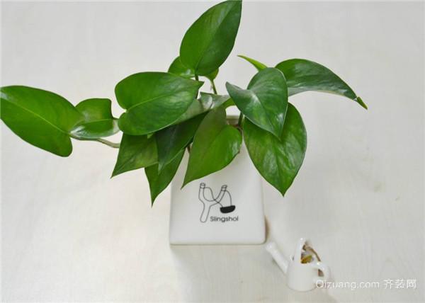 绿植墙常用植物图片