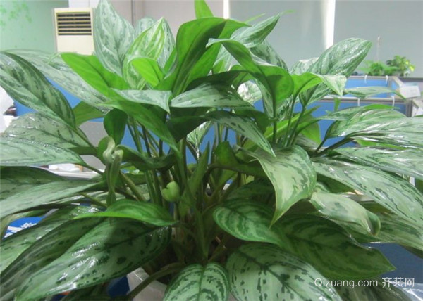 喜阳开花植物图片图片