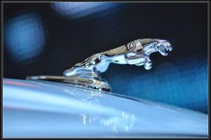 捷豹汽车标志,捷豹的汽车标志是什么意思