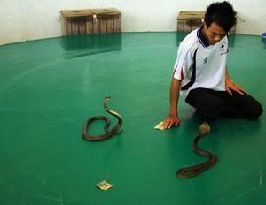 男人梦见大蟒蛇,男人梦见蛇缠身,男人梦见蛇是什么意思