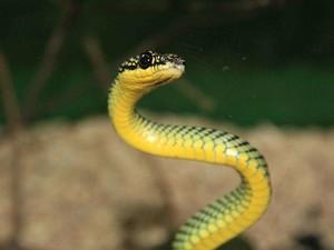 梦见蛇好吗,孕妇梦见蛇好吗,男人梦见蛇好吗