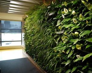 辦公室綠植墻施工圖
