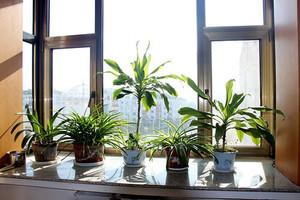 9平米陽臺植物擺放圖片